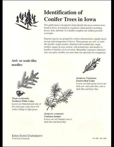 Identification of Conifer Trees in Iowa