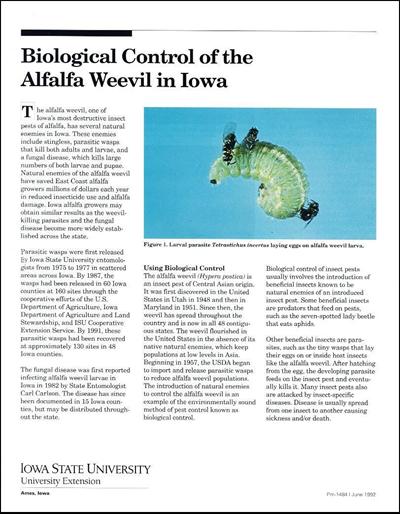 Biological Control of the Alfalfa Weevil in Iowa
