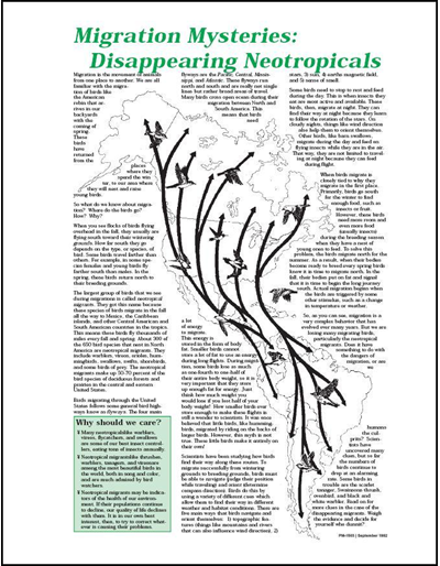 Migration Mysteries: Disappearing Neotropicals