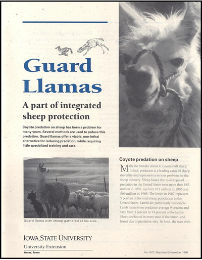 Guard Llamas: A Part of Integrated Sheep Protection