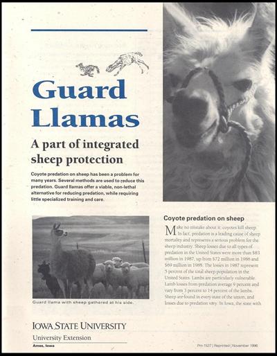 Guard Llamas: A Part of Integrated Sheep Protection