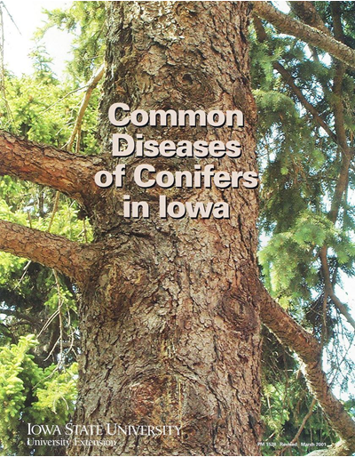 Common Diseases of Conifers in Iowa