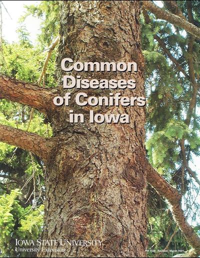 Common Diseases of Conifers in Iowa