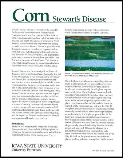 Corn Stewart's Disease