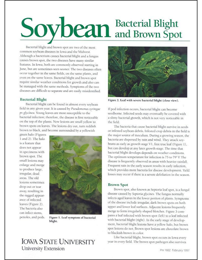 Soybean Bacterial Blight and Brown Spot