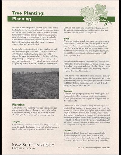 Tree Planting: Planning