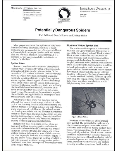 Potentially Dangerous Spiders