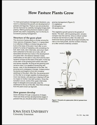 How Pasture Plants Grow