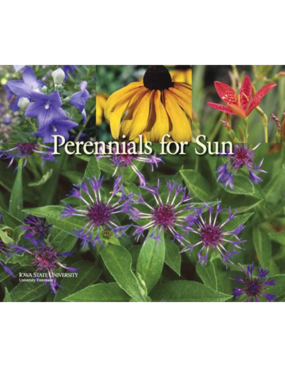 Perennials for Sun