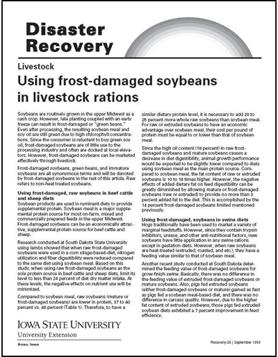 Livestock: Using Frost-Damaged Soybeans in Livestock Rations - Disaster Recovery Series