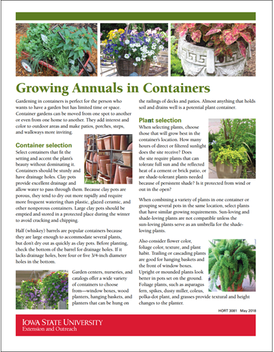 Growing Annuals in Containers