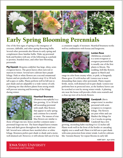 Early Spring Blooming Perennials
