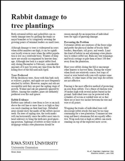 Rabbit Damage to Tree Plantings