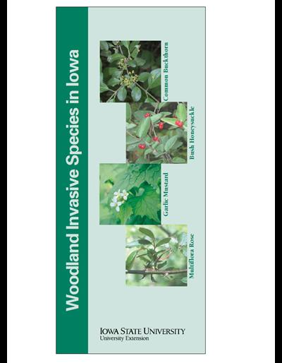 Woodland Invasive Species In Iowa