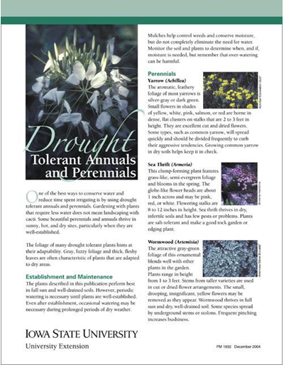 Drought Tolerant Annuals and Perennials