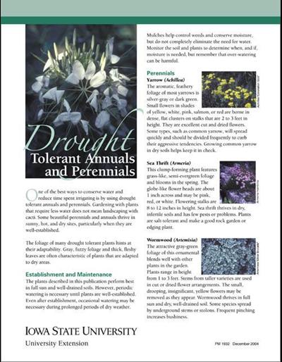 Drought Tolerant Annuals and Perennials
