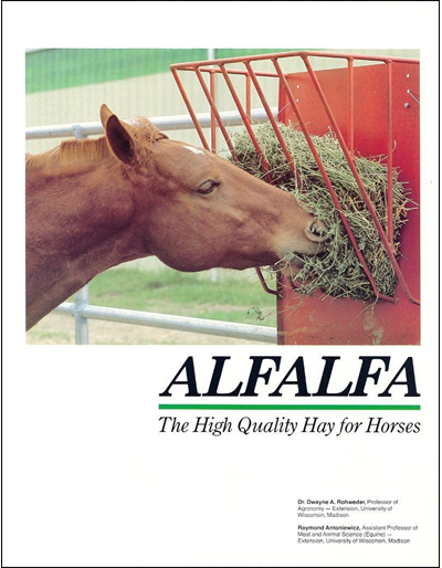 Alfalfa: The High Quality Hay for Horses